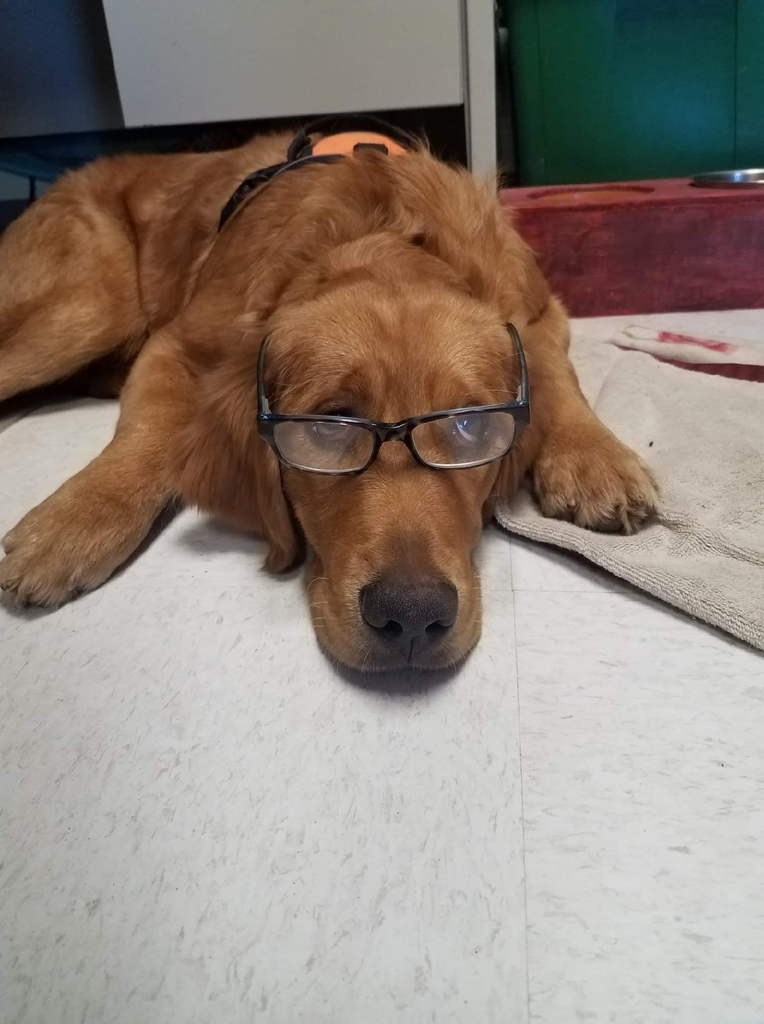 "Sometimes reading is ""ruff""!"